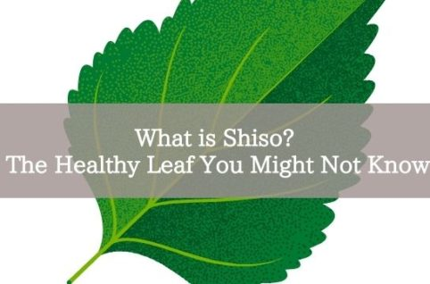 What is Shiso? The Healthy Leaf You Might Not Know