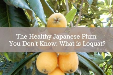 The Healthy Japanese Plum You Don't Know: What is Loquat?