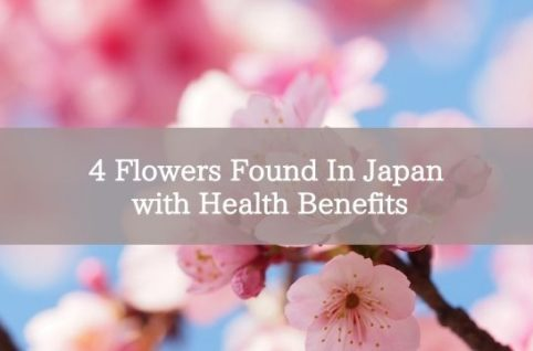 4 Flowers Found In Japan with Health Benefits