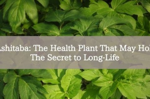Ashitaba: The Health Plant That May Hold The Secret to Long-Life