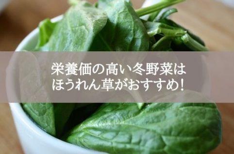 栄養価の高い冬野菜はほうれん草がおすすめ!