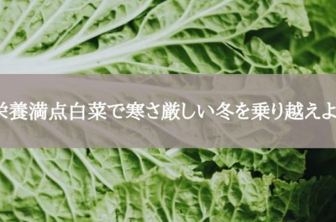 栄養満点白菜で寒さ厳しい冬を乗り越えよう