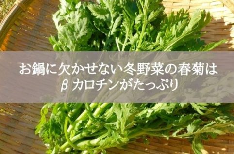 お鍋に欠かせない冬野菜の春菊は βカロチンがたっぷり