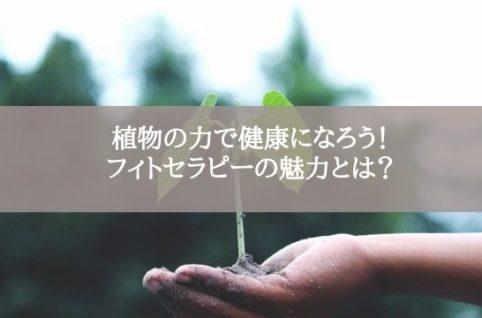 植物の力で健康になろう! フィトセラピーの魅力とは?